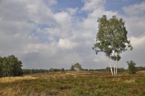 Wandelnetwerk De Brabantse Kempen