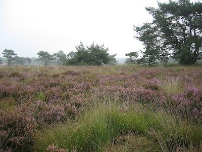 Wandelnetwerk Kempense Heide